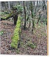 Mossey Log Wood Print