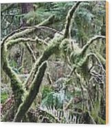 Mossy Forest Wood Print