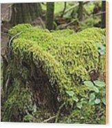 Mossy Old Stump Wood Print