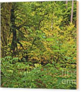 Mossy Rainforest Wood Print