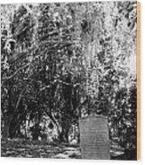 Mossy Rest Wood Print