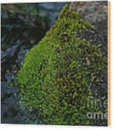 Mossy River Rock Wood Print