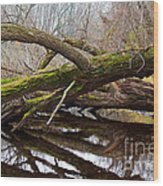 Mossy Tree Wood Print by Ms Judi