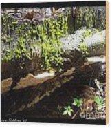 Mossy Waterfall On Mushroom Rock Wood Print