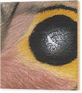 Moth Automeris Zozine Detail Of False Wood Print