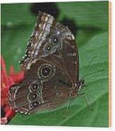 Moth I 2403 Wood Print