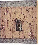 Moth On Brick Wood Print