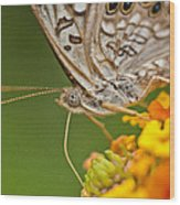 Moth On Flower Clusters Wood Print