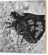 Moth One Wood Print