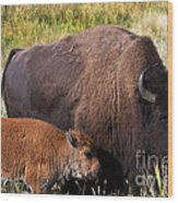 Mother And Calf Wood Print