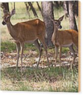 Mother And Yearling Deer Wood Print