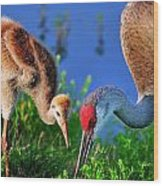Mother And Young Sandhill Crane Wood Print