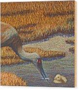 Mother Sandhill Crane Wood Print by Thomas Maynard