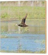 Mottled Duck In Flight Wood Print by Lynda Dawson-Youngclaus