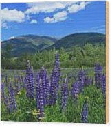 Mount Adams And Lupine Field Wood Print