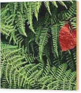 Mountain Bindweed And Fern Fronds Wood Print