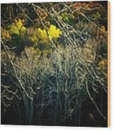 Mountain Branch Wood Print