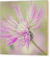 Mountain Cornflower Pink Wood Print by