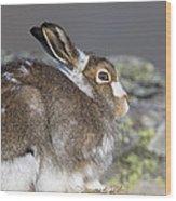 Mountain Hare Wood Print