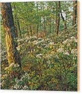 Mountain Laurel Blooming In A Hyner Wood Print