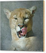 Mountain Lion Wood Print