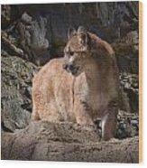 Mountain Lion On The Prowl Wood Print