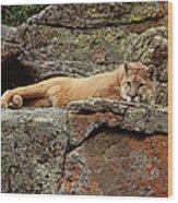 Mountain Lion Puma Concolor Lounging Wood Print by Gerry Ellis