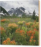 Mountain Meadow, Canada Wood Print