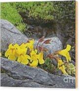 Mountain Monkey Flower Wood Print