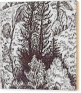 Mountain Pines And Aspen Field Sketch Wood Print