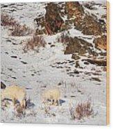 Mountain Sheep Wood Print