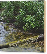 Mountain Stream And Rhododendron Wood Print