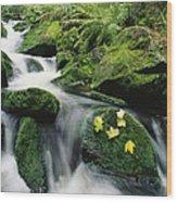 Mountain Stream Cascading Wood Print