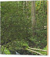 Mountain Stream Panorama Wood Print by Andrew Soundarajan