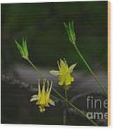 Mountain Wildflowers Wood Print