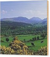 Mourne Mountains, Co Down, Ireland Wood Print