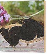 Mourning Cloak Butterfly Lovin' Wood Print