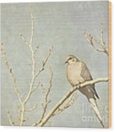 Mourning Dove In Winter Wood Print