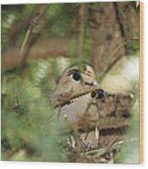Mourning Dove Nesting Wood Print