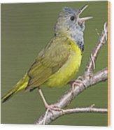 Mourning Warbler Oporornis Philadelphia Wood Print