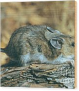 Mouse On A Log Wood Print