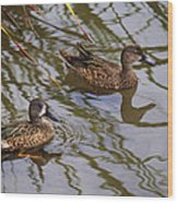 Mr And Mrs Blue Wing Teal Wood Print