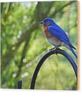 Mr Bluebird Wood Print