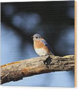Mr. Bluebird Wood Print