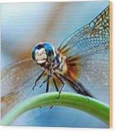 Mr Fly Wood Print by Kendra Longfellow