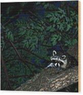 Mr. Raccon Wood Print