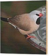 Mr. Red Beak Wood Print