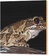 Mr. Toad Wood Print