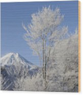 Mt Fuji And Frost-covered Trees Wood Print