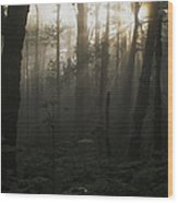 Mt. Hood National Forest Near Larch Wood Print
